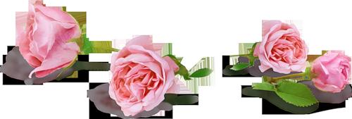 мини розы от эммы